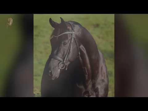 Video Preview of D'Egalité