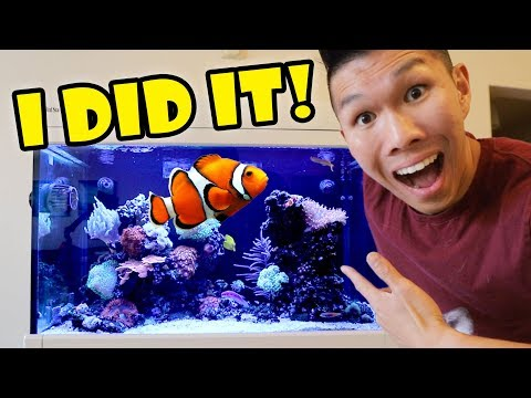 $2,000 FISH Aquarium Now Thriving — What Happened || Life After College: Ep. 608