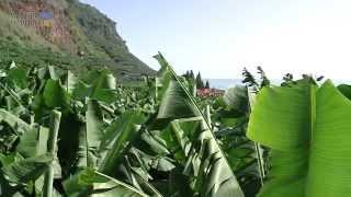 Lebendig Madeira