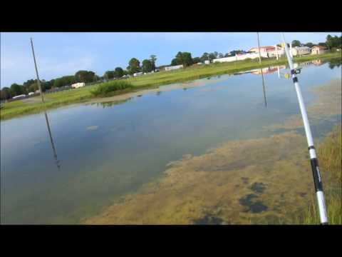 Top water bass fishing in a retention pond in FL.