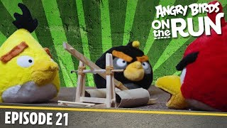 Angry Birds On The Run | The Birds Get Angry   S1 Ep21