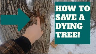 How To Save A Dying Tree!