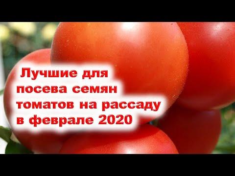 Лучшие дни для посева семян томатов на рассаду в феврале 2020 года. Выбираем благоприятные периоды.