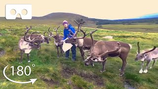 This Sanctuary Wants To Rewild Reindeer in Scotland | VR 180 | BBC Earth
