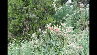 Native Gardens Boost Ecosystem with Low Water