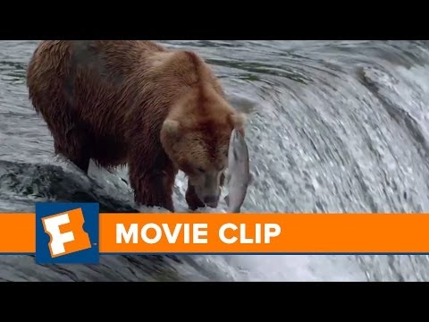 Bears Clip 'Fishing Fails'