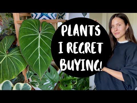 , title : 'Houseplants I REGRET BUYING!