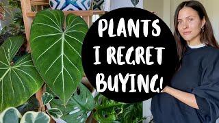 Houseplants I REGRET BUYING!