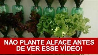 Como Plantar Alface Em Garrafa Pet/vasos (processo completo) | Horta Vertical do Tuím