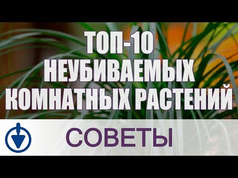 Комнатные растения: ТОП-10 неубиваемых цветов для дома