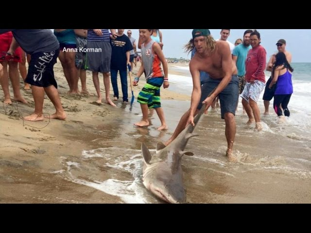 Video Shows Men Catching Shark Off Coast of North Carolina | ABC World News Tonight | ABC News