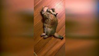Смотреть лучшие приколы с животными 2019 #20, смешные животные коты и кошки, смотреть смешные видео.