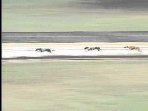 Race 40 FGA & WVGOA Stake Main
