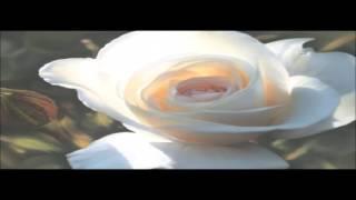 Chante Moore - Love's Supreme