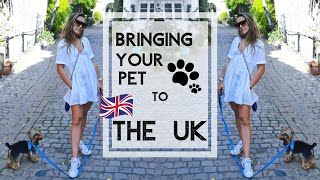HOW TO BRING YOUR PET TO THE UK/ OPTIONS, WHAT DO YOU NEED & MORE