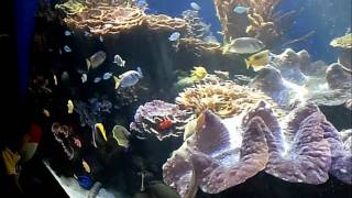 preview picture of video 'Waikiki Aquarium in Honolulu 12242010 (HD)'