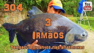 Programa Fishingtur na TV 304 - Pesqueiro 3 Irmãos