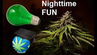 Gardening At Night + Best TIME To Water Cannabis Plants