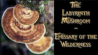 THE LABYRINTH MUSHROOM ~ Emissary of the Wilderness