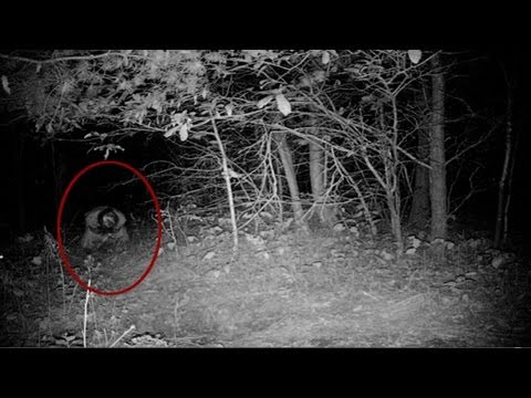 steam community video unexplained real scary monster