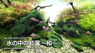 Autumn foliage underwater - Fall in Japan