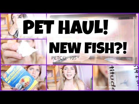 Petco and Petsmart Haul! Hermit Crab and Fish haul! +New Fish!