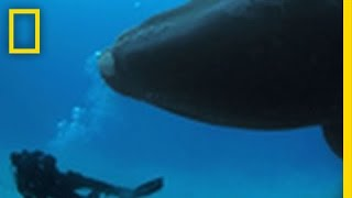 A Magical Day with a Right Whale | Ocean Soul thumbnail
