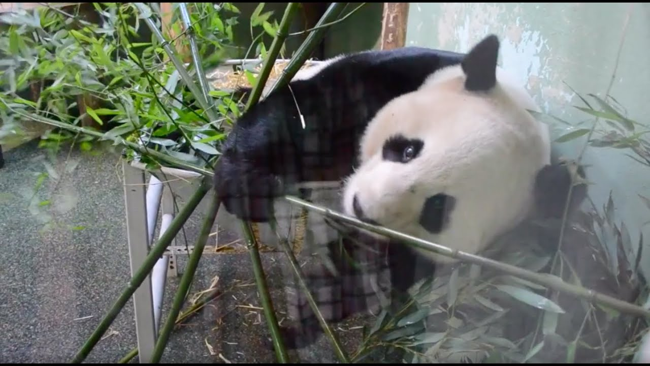 My First Vlog- Edinburgh Zoo Part 1