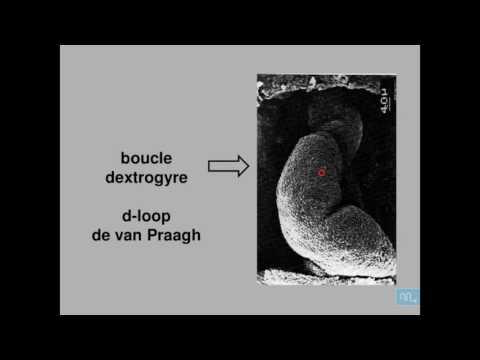 Les degrés de la thrombose veineuse