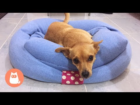 Cuccia per cani fai da te con maglione 🐶 Idee riciclo creativo per cani