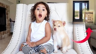 SOMEONE LEFT A PUPPY AT OUR DOORSTEP!!! **SHOCKING**