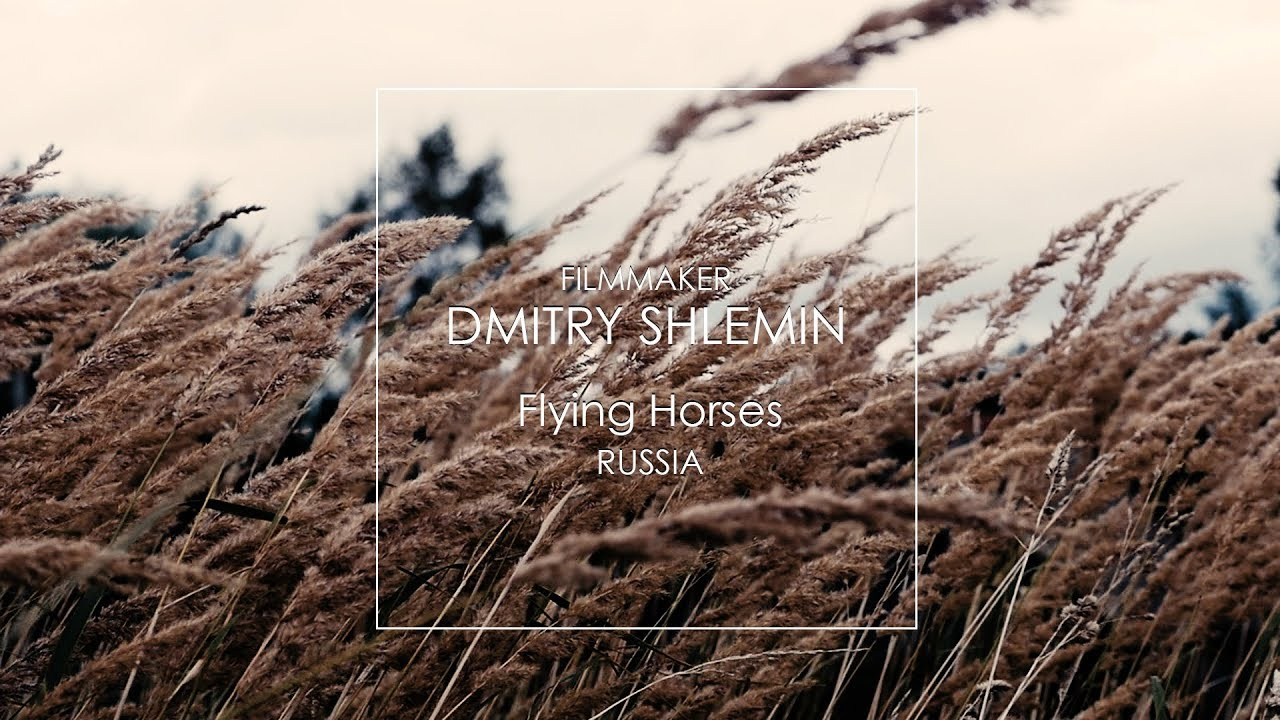 Flying Horses Dmitry Shlemin Filmmaker Дмитрий Шлемин +79261271277
