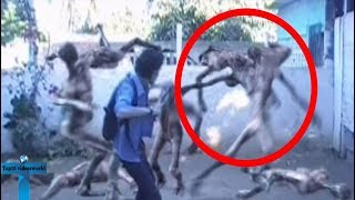 Top 7 Most Mysterious Creatures Caught In China -  Bizarre Creatures Sighting That Made Panic