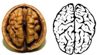 Zapanjujuća Sličnost! Orah Kao Mozak, Pasulj Kao Bubreg I To Nije Sve