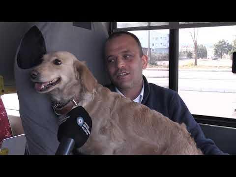 Soğuk havada otobüse sığınan köpek içimizi ısıttı
