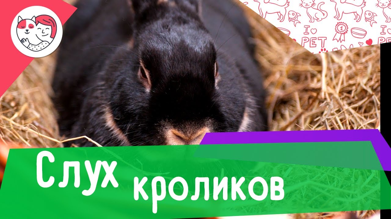 4 особенности слуха кроликов