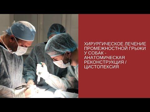 Хирургическое лечение промежностной грыжи у собак - анатомическая реконструкция / цистопексия