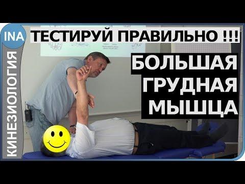Мышечное тестирование. Большая грудная мышца. Кинезиология. Обучение в Германии