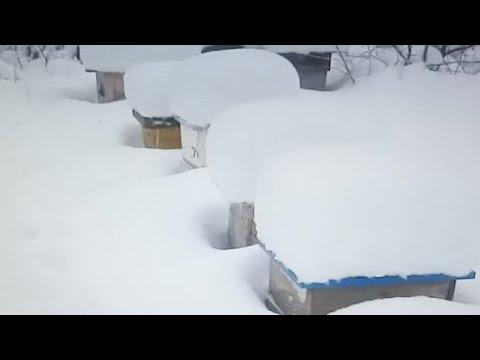 Пчеловодство.Скоро трансляция. Тема,аномальное похолодание.Как подготовить пчёл к зимовке.