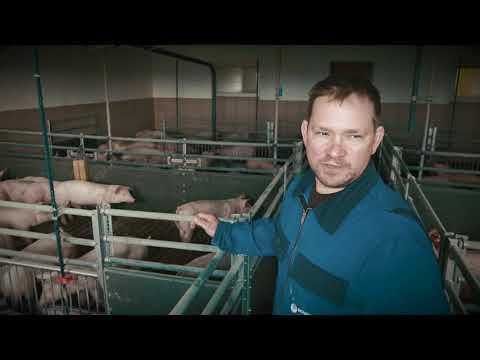 Schweinehaltung konventionell - Mastdauer