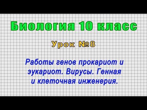 Биология 10 класс (Урок№8 - Работы генов прокариот и эукариот. Вирусы.Генная и клеточная инженерия.)