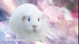 Guinea Pig Transcendence