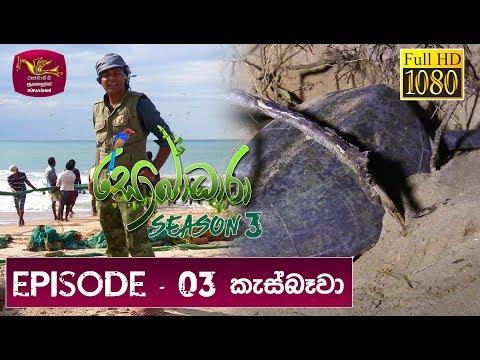 Sobadhara Rupavahini | 2019-03-15 | Turtle in Sri Lanka
