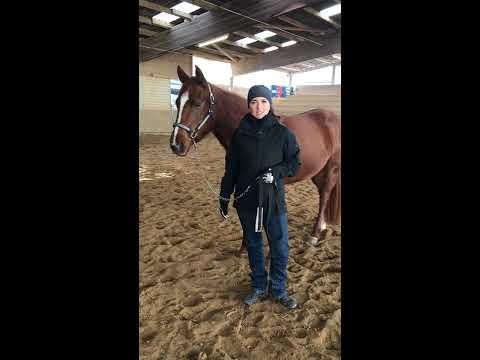 """1. Showmanship Video mit Sophie & Paris """"Kette einschnallen und verwenden"""""""