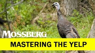Turkey Calls And Turkey Calling: How To Master The Yelp. How To Use Mouth Calls.