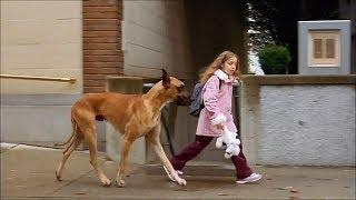 女孩偷偷收养狗狗被父母发现,怕不同意,于是带着狗狗离家出走