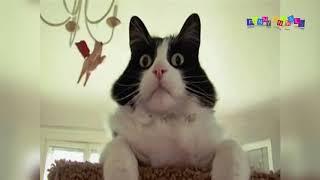 Просто приколы с котанами. Ты не видишь, что миска пустая.