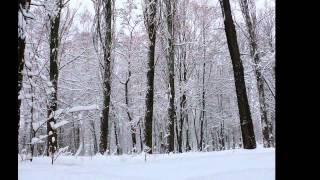 Киев - Зима - Снег - Красота - 22 января 2012 год