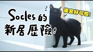 【黃阿瑪的後宮生活】Socles的新居歷險記!