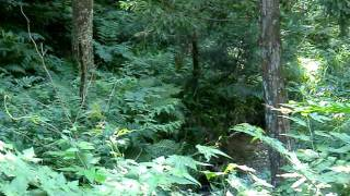 森林浴・小川のせせらぎ・夏の涼を求めて